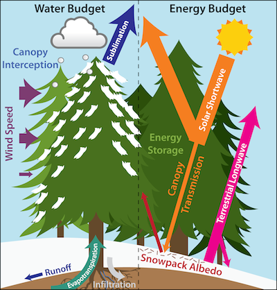 Water Budget in Forest